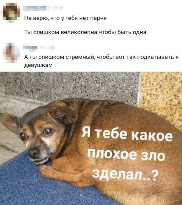 Смешные картинки из сети интернет смешные картинки
