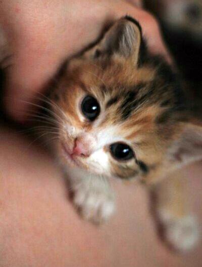«Буду жить у тебя! Это не обсуждается…» Девушка 5 раз пыталась найти кошке хозяев, но она всегда возвращается!