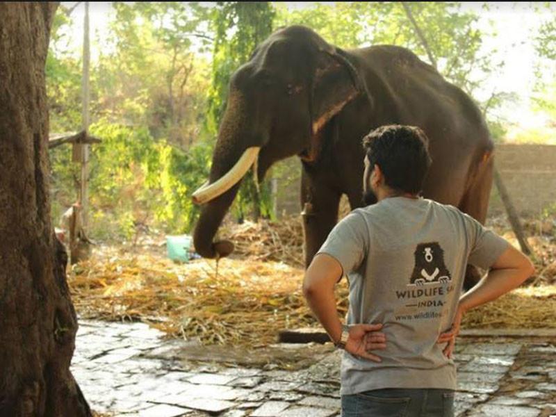 Зоозащитники освободили 75-летнего слона, который 50 лет просидел на цепи