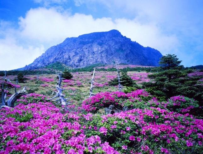 вулкан Халласан, остров Чеджудо