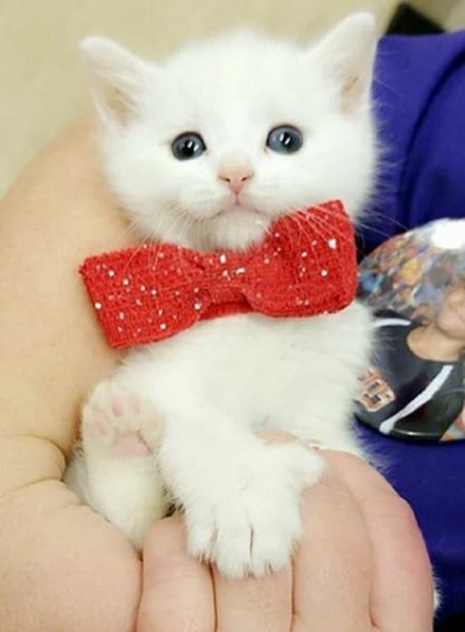 Котенок на лодошке