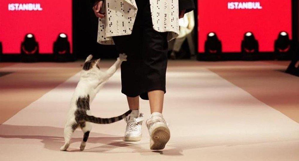 В Турции бездомная кошка прошлась по подиуму во время модного показа