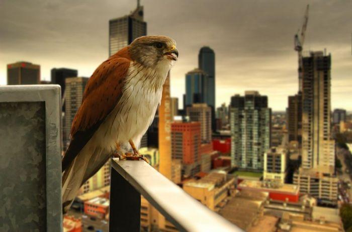 Красивые фото птиц!