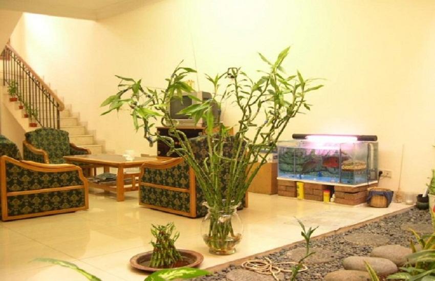 Картинки по запросу комнатные растения в интерьере квартиры