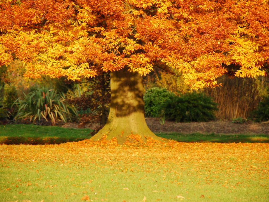 Картинки по запросу золотая осень на рабочий стол