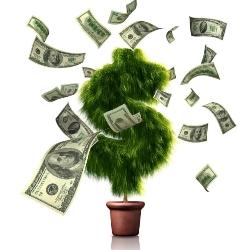 Денежное дерево поможет привлечь богатство