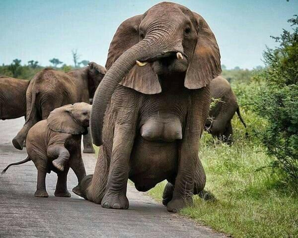 Такого вы еще не видели - 25 невероятных ракурсов обычных животных животные