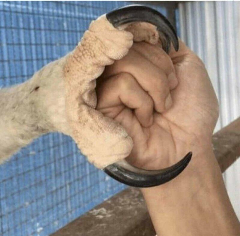 Когти орла в сравнении с кулаком взрослого мужчины животные, занимательно, интересно, необычно, природа, ракурс, факты