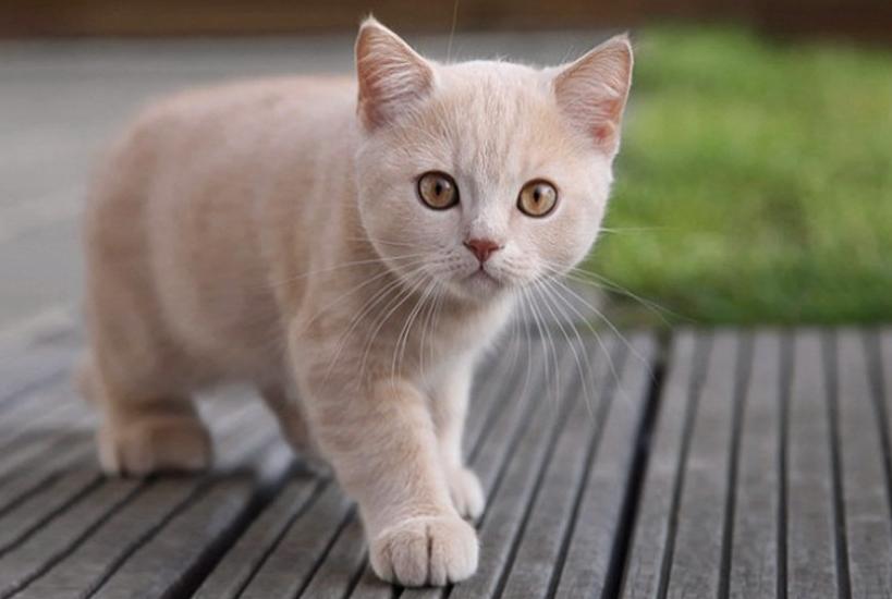 Кот-эквилибрист !