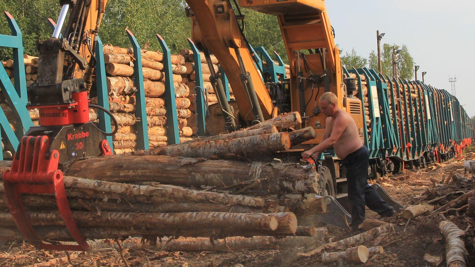 Контрабандисты из Прибайкалья попались на вывозе 416 тысяч кубометров леса в Китай