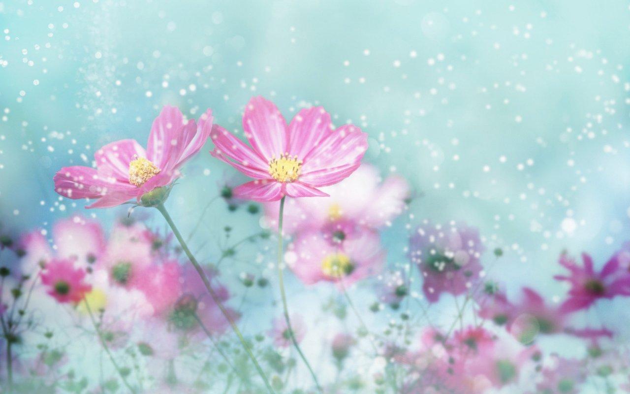 Сюрпризы цветочного гороскопа