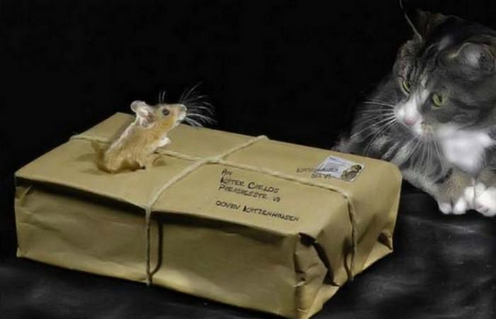 Самые необычные вещи, которые пересылали по почте
