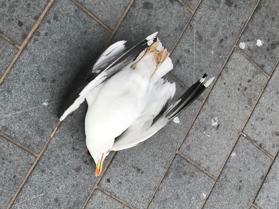 Обжора на глазах у детей убил об стену чайку, которая украла у него картошку