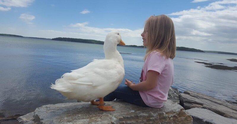 Девочка и утка считают друг друга родней