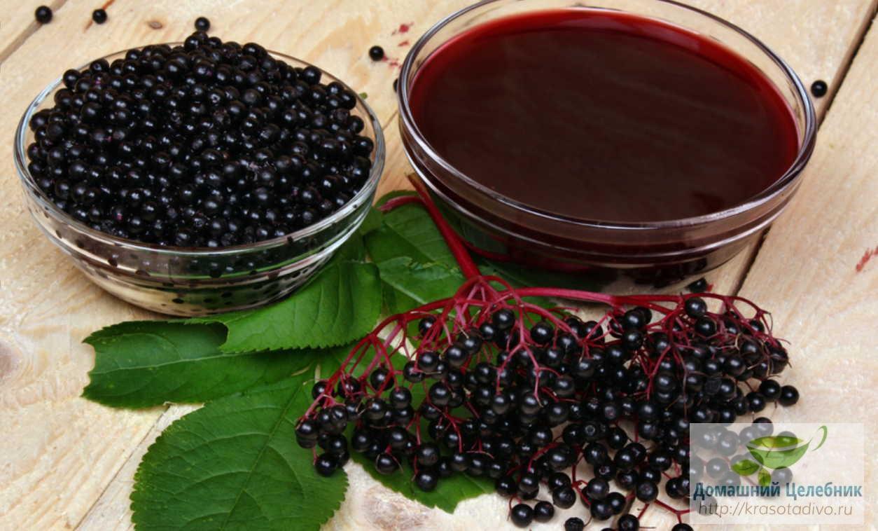 Кисель из бузины пила — и снова ожила! Напиток жизни из ягод черной бузины — настоящий клад