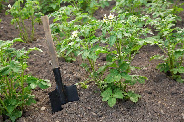 Народные рецепты настоев и отваров для борьбы с болезнями и вредителями сада и огорода огород,сад