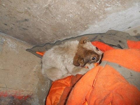 Пес спас щенка, выброшенного на помойку...