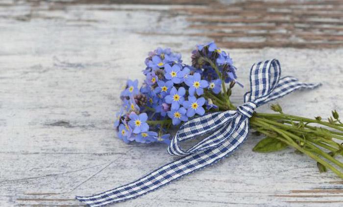 Незабудка символизируют обещание нежной любви - цветы на День Святого Валентина