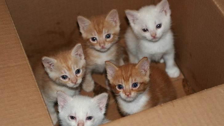 Моя мама придумала и реализовала гениальный план, как пристроить всех котят из приюта