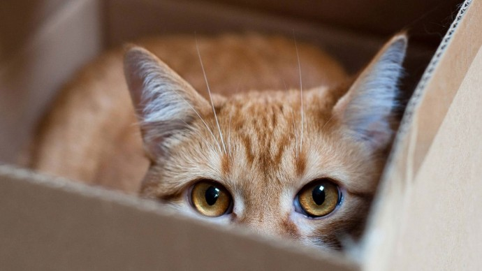 15 мест, где вы никак не ожидали увидеть кота