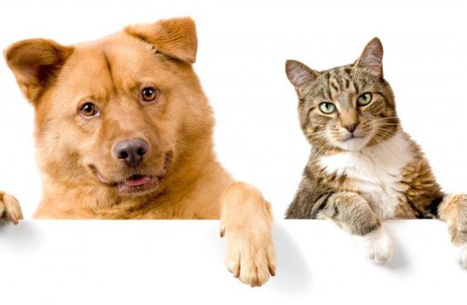 12 пород собак, которые подружатся с вашей кошкой