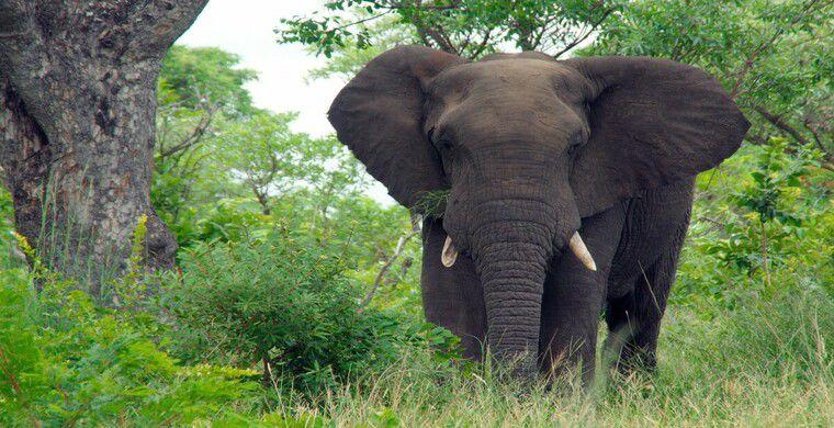 Спасатели вытащили слона из канала