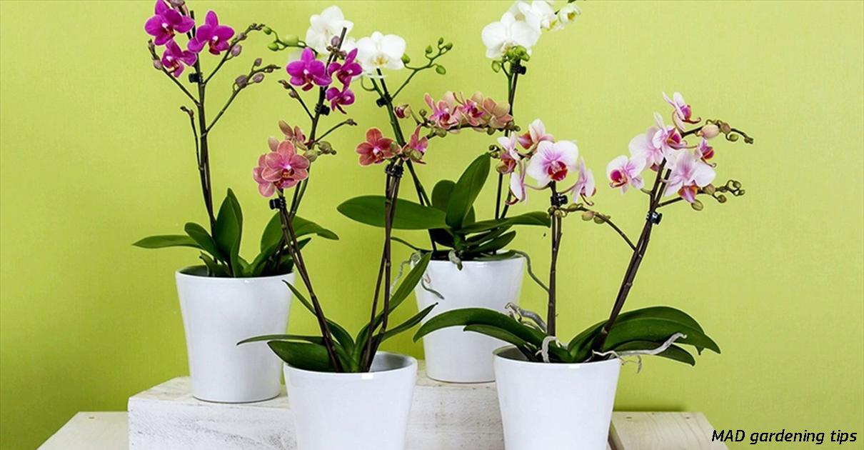 10 правил, чтобы орхидея цвела снова и снова. И каждый раз - все круче и круче!