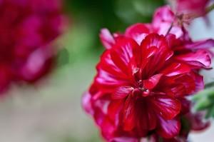 flower-922608_1280