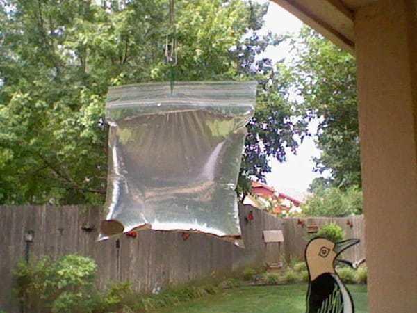 Картинки по запросу Это самый дешевый метод избавления от насекомых. Гениальное устройство от надоедливых мух