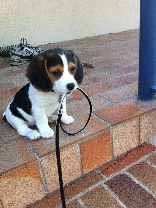 самые милые щеночки в мире (6)