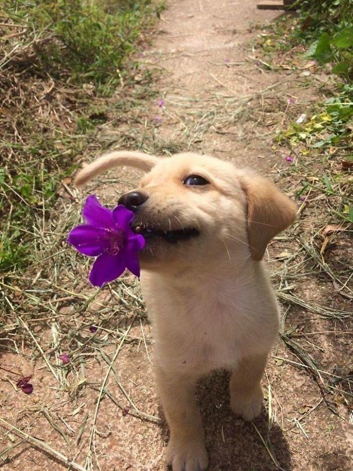 5. С подарком! животные, настроение, очарование, подборка, собака, фотография, щенок