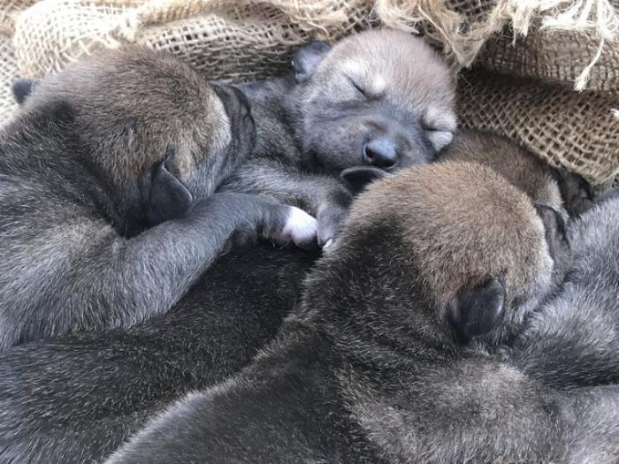 Когда родились эти щенки, весь мир радовался. Это нестоящее чудо!