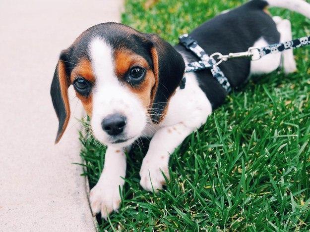 самые милые щеночки в мире (31)