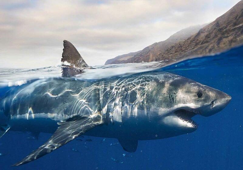 Акулы Большой Барьерный риф, австралия, интересное, континент, природа, факты