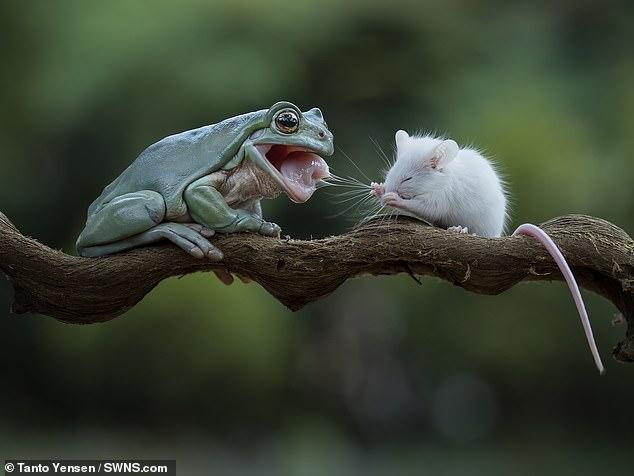 Любовь всесильна, спору нет (автор: Михаил Зосименко)