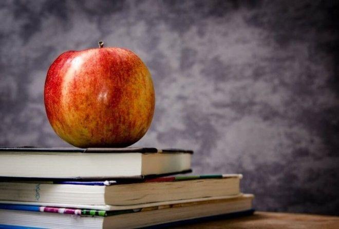 Интересные факты об образовании