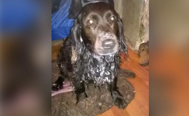 Неравнодушный туляк спас собаку из ледяной реки