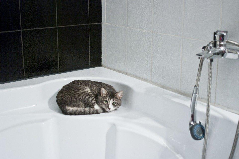 Одинокие коты затопили кварт…