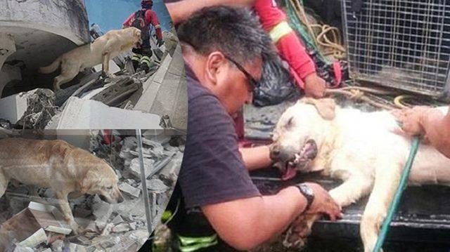 Он спас семь человек от разрушительного землетрясения и умер героем