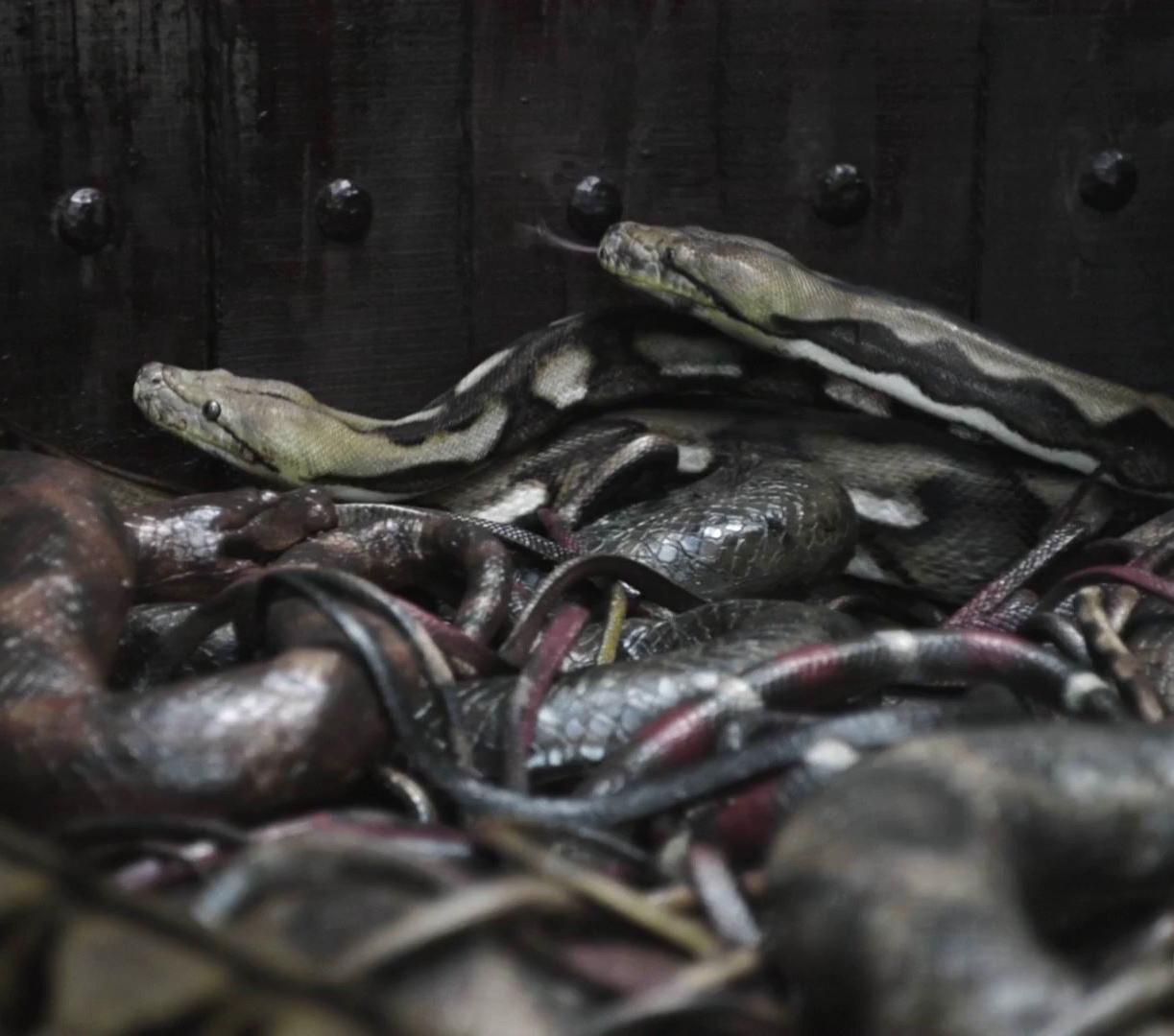 5 видов казней с использованием животных. Топтание слонами, яма со змеями
