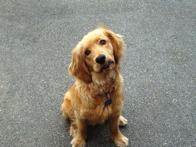 самые милые щеночки в мире (9)