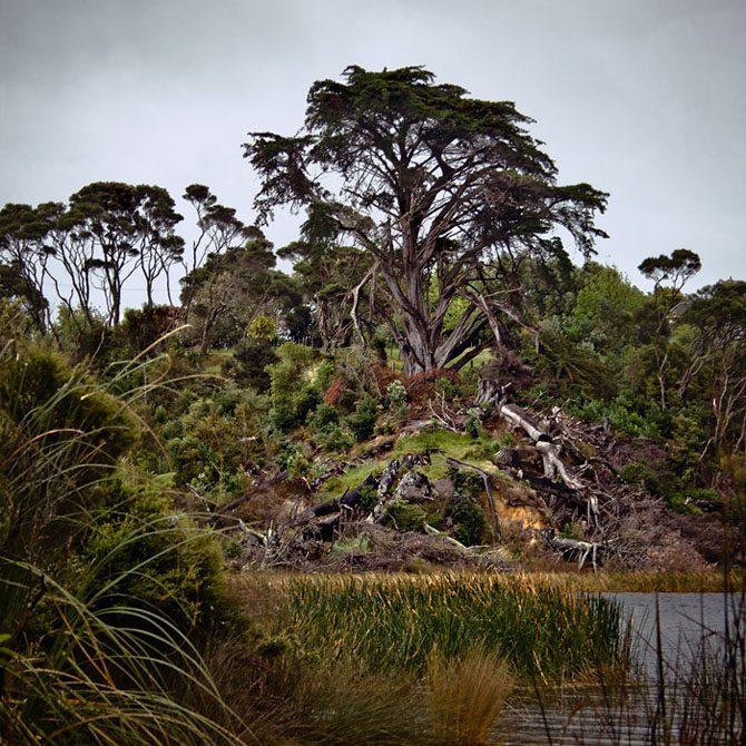 женщина лес новая зеландия фото известного художника десертный один лучших