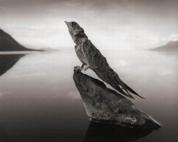 Озеро, которое превращает животных в каменные статуи