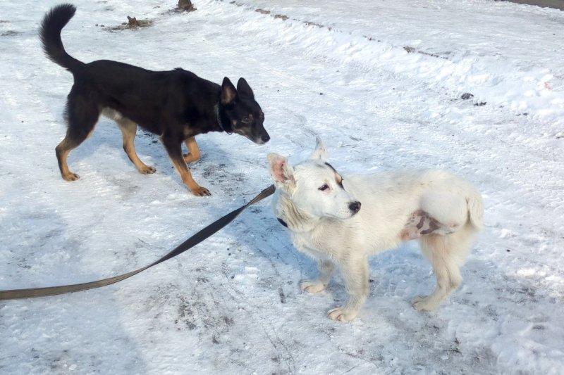 В подъезде неподвижно лежал едва живой щенок пятнистая собака, собака, щенок