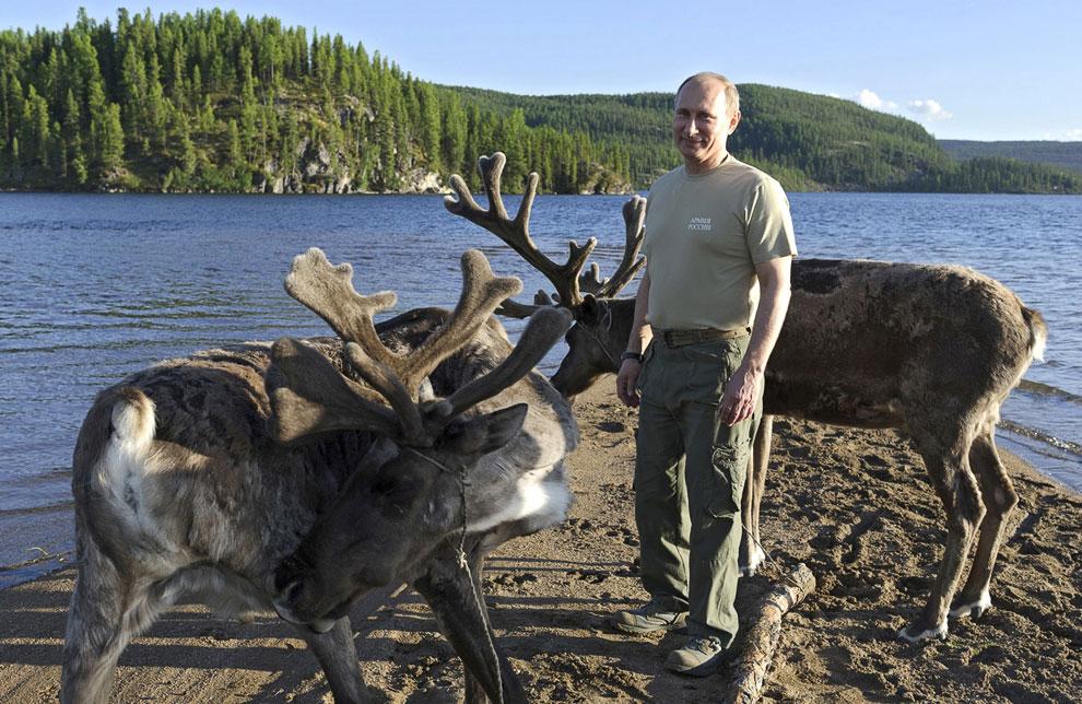 Путин — один из многих россиян, кто потреблял и купался в крови из отрубленных пантов сибирских маралов