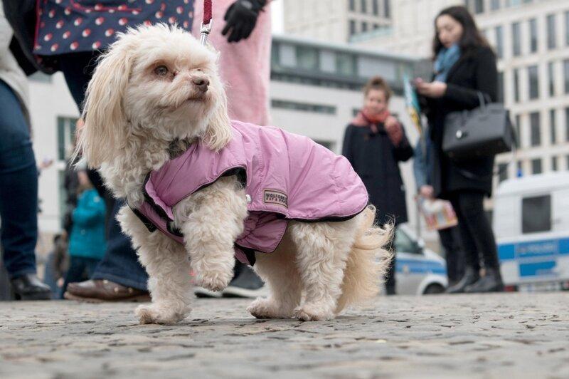 Закон о молчании собак жизнь в Швейцарии, интересно, факты, швейцария