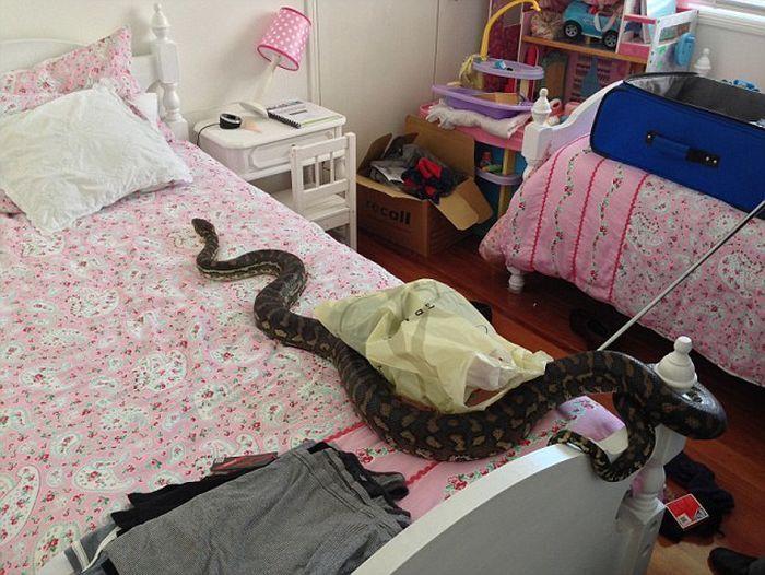 Мне часто снятся змеи, причем, в жизни я их очень боюсь как и во сне.