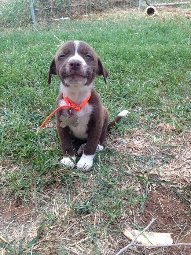 самые милые щеночки в мире (3)