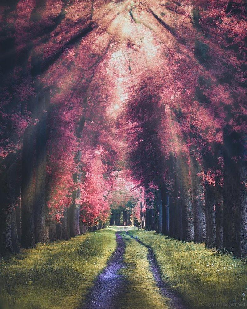 Нидерланды красота, мир, природа, путешествия