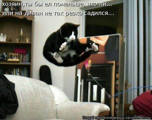 Новая котоматрица для всех!